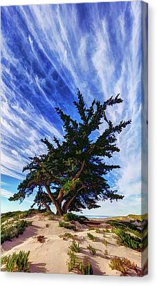 Abeautifulsky Canvas Print - Pacific Beach Juniper by ABeautifulSky Photography by Bill Caldwell