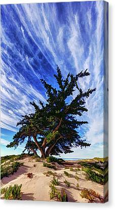 Pacific Beach Juniper Canvas Print by ABeautifulSky Photography