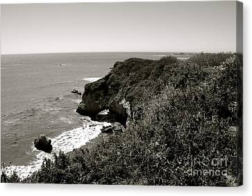 Pacific  Canvas Print by Lisa Schafer