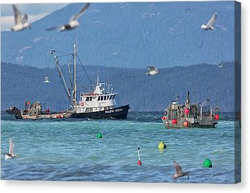 Canvas Print featuring the photograph Pacific Ocean Herring by Randy Hall