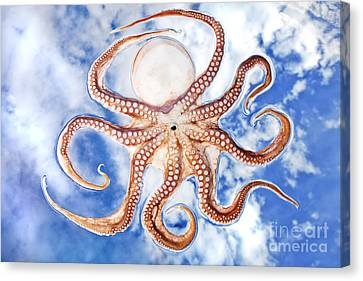 Pacific Octopus Canvas Print by Mike Raabe