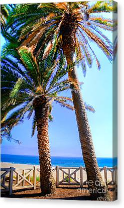 Pacific Palisades Park Canvas Print by Kelly Wade