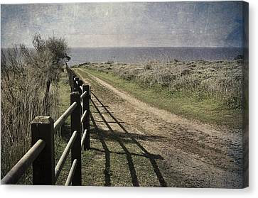 Pacific Path Canvas Print by Kevin Bergen
