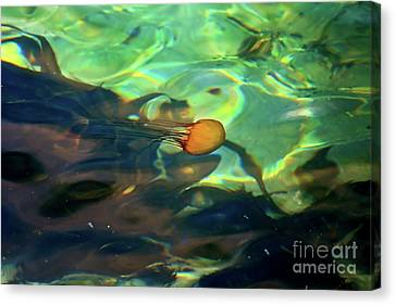 Canvas Print featuring the photograph Pacific Sea Nettle Jellyfish by Susan Wiedmann
