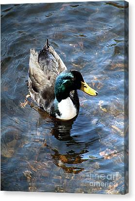 Paddling Peacefully Canvas Print by RC DeWinter