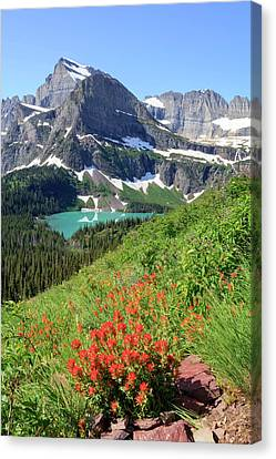 Paintbrush Above Grinnell Lake Canvas Print