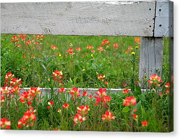 Paintbrushes And Fence Posts Canvas Print by Brian Harig