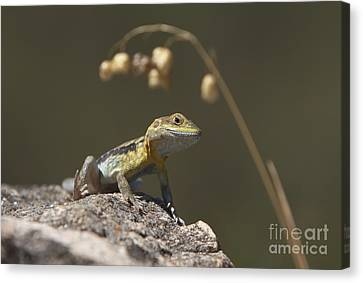 Painted Dragon Canvas Print by Bill Robinson