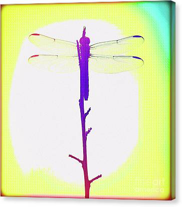Surf Lifestyle Canvas Print - Painted Dragonfly IIi by Chris Andruskiewicz