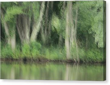 Painted Forest  Canvas Print by Karol Livote
