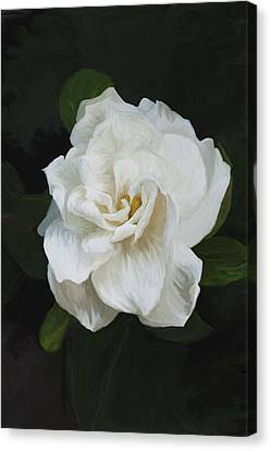 Canvas Print featuring the photograph Painted Gardenia by Phyllis Denton