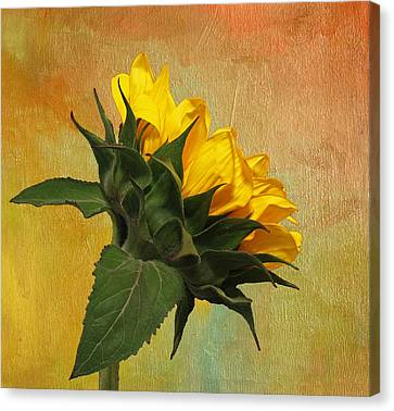 Painted Golden Beauty Canvas Print by Judy Vincent