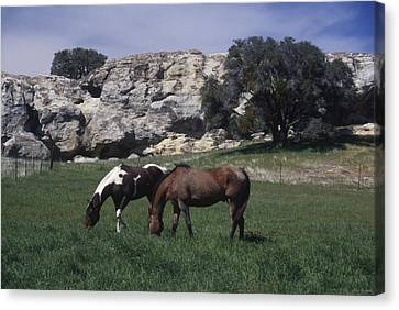 Painted Horse - Painted Rock Canvas Print by Soli Deo Gloria Wilderness And Wildlife Photography