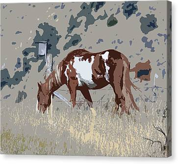 Canvas Print featuring the photograph Painted Horse by Steve McKinzie
