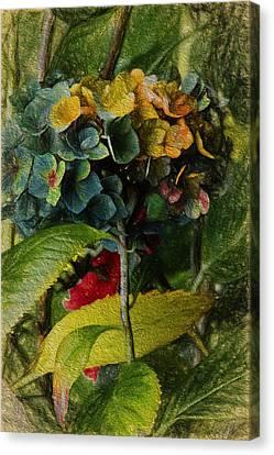 Painted Hydrangeas  Canvas Print by Bonnie Bruno