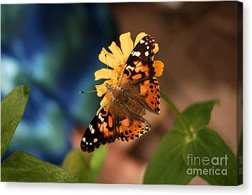 Canvas Print featuring the photograph Painted Lady Butterfly by Eva Kaufman