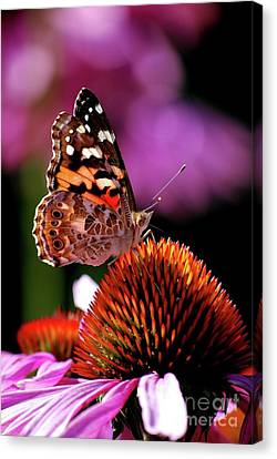 Canvas Print featuring the photograph Painted Lady by Lila Fisher-Wenzel