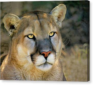 Painted Mountain Lion Canvas Print