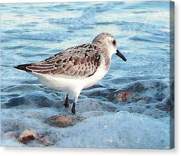 Painted Piper Canvas Print by Margie Avellino