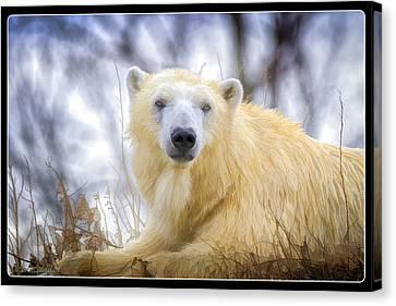 Painted Polar Bear  Canvas Print by LeeAnn McLaneGoetz McLaneGoetzStudioLLCcom