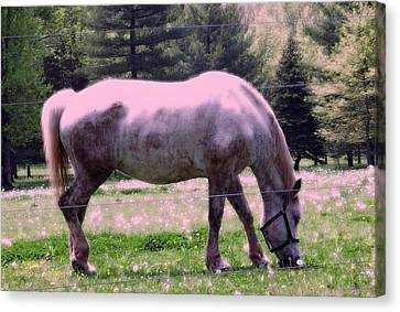 Canvas Print featuring the photograph Painted Pony by Susan Carella
