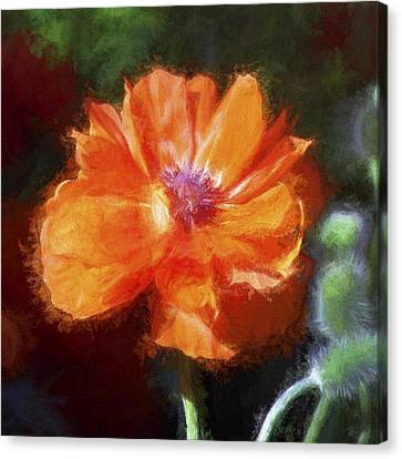 Painted Poppy Canvas Print by Christina Lihani