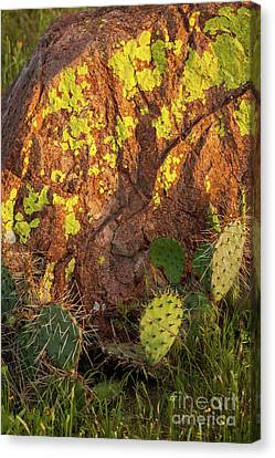 Painted Rock Canvas Print by Iris Greenwell