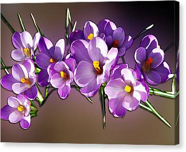 Canvas Print featuring the photograph Painted Violets by John Haldane