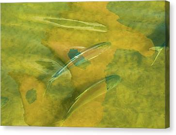 Canvas Print featuring the photograph Painterly Fish by Carolyn Dalessandro