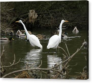 Canvas Print featuring the photograph Pair Of Egrets by George Randy Bass