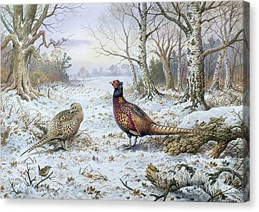 Icy Canvas Print - Pair Of Pheasants With A Wren by Carl Donner