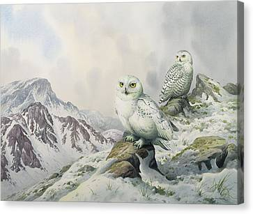 Pair Of Snowy Owls In The Snowy Mountains, Australia Canvas Print by Carl Donner