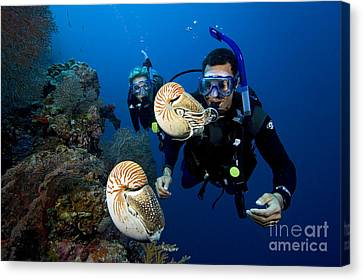 Palau Underwater Canvas Print by Dave Fleetham - Printscapes