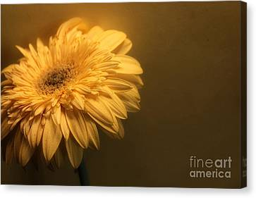 Pale Canvas Print by Clare Bevan