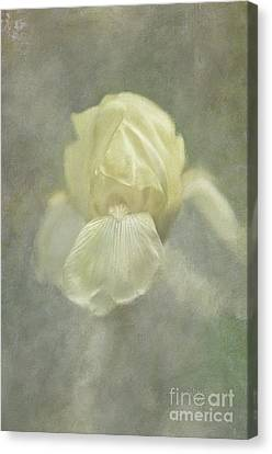 Canvas Print featuring the digital art Pale Misty Iris by Lois Bryan