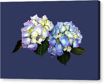 Pale Pink And Blue Hydrangea Canvas Print
