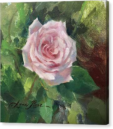 Pale Rose Study Canvas Print by Anna Rose Bain
