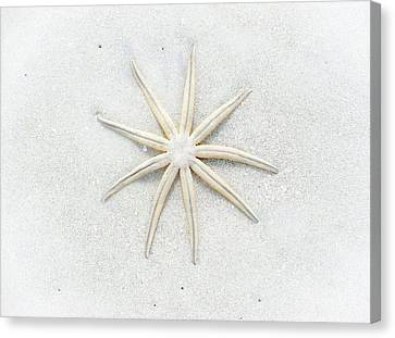 Pale Star Canvas Print by Lynn Wohlers