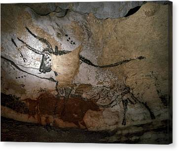 Paleolithic Art Of Bulls On Calcite Canvas Print by Keenpress