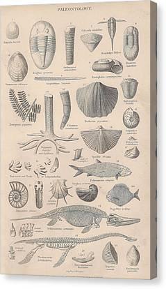 Paleontology Canvas Print