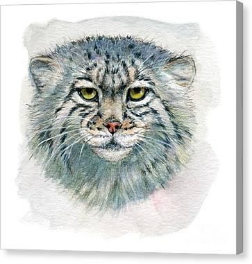 Pallas's Cat 862 Canvas Print by Svetlana Ledneva-Schukina