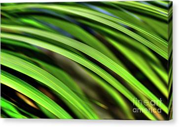Canvas Print featuring the photograph Palm Abstract By Kaye Menner by Kaye Menner