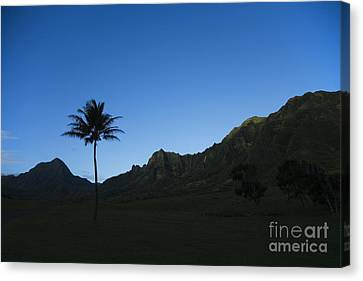 Palm And Blue Sky Canvas Print by Dana Edmunds - Printscapes