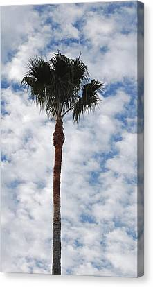 Palm And Clouds Canvas Print by Jean Booth