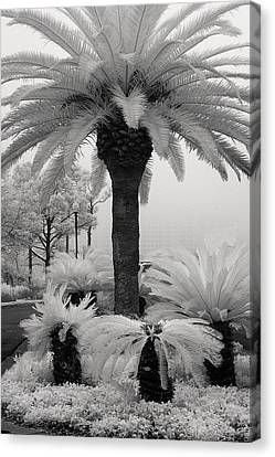 Palm At Gulf Shores Canvas Print by Fred Baird