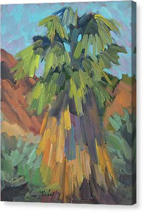 Palm At Santa Rosa Mountains Visitors Center Canvas Print