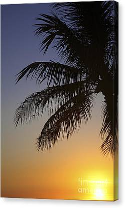 Palm At Sunset Canvas Print by Brandon Tabiolo - Printscapes