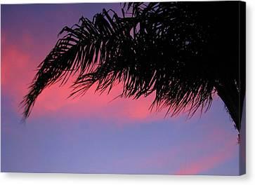 Palm At Sunset Canvas Print