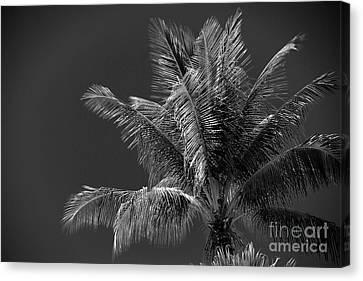 Palm Beauty Monochrome Lahaina Canvas Print