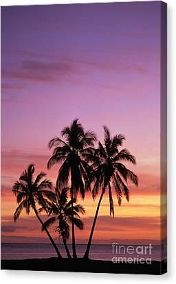 Palm Cluster Canvas Print by Allan Seiden - Printscapes